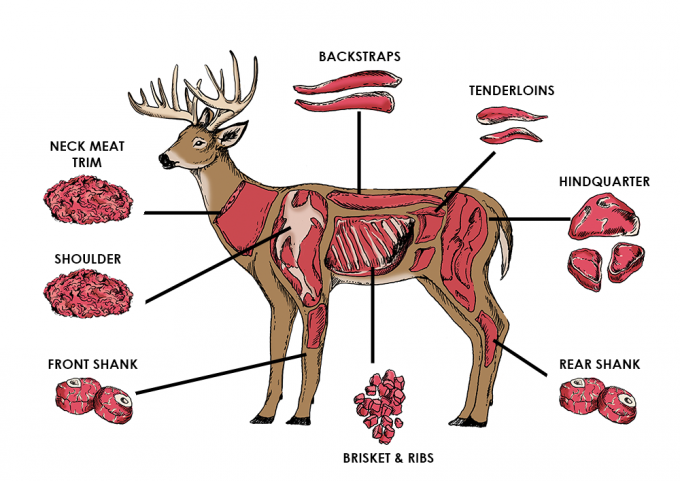 deer-diagram